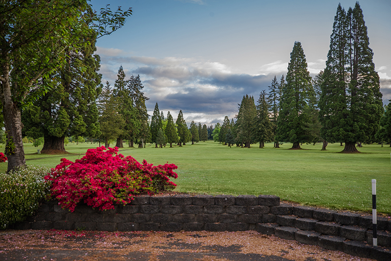 Green golf course placed between two rows of evergreen trees