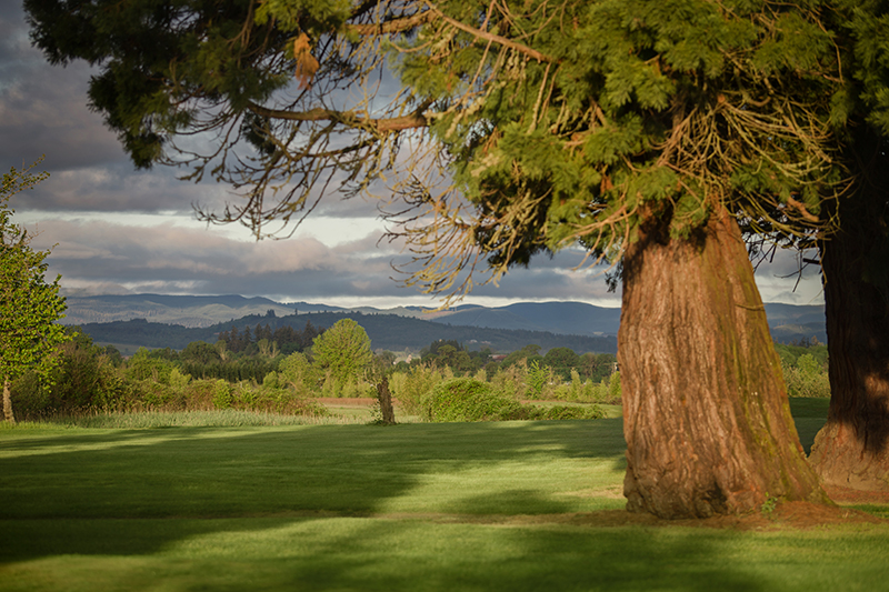 Large shade tree and well kept grass with mountains in the distance