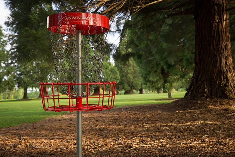 Disc golf basket next to a large tree